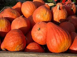 Varieties Of Pumpkins by Explore The Sense Of Touch Using Pumpkins