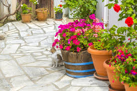 There Are Common Plastic Pots Featured On This Step But The Star Of Landing