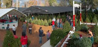 Popular Christmas Tree Species by Where You Can Buy Christmas Trees In Los Angeles