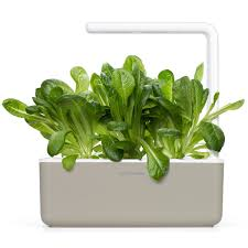 11 AirPurifying Plants For A Healthy Home Family Handyman The