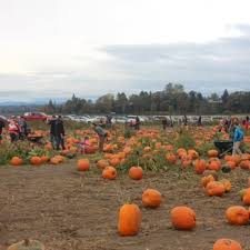 Best Pumpkin Patch Snohomish County by The Farm 132 Photos U0026 87 Reviews Pumpkin Patches 7301