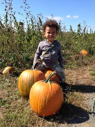 Pumpkin Picking Corn Maze Long Island Ny by 7 Farms To Go Pumpkin Picking Near Nyc Beyond Mom