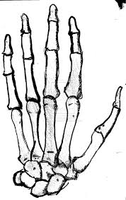 Zombie Hand Pumpkin Stencil Free by Skeleton Drawings On Hands Google Search Artistic Make Up