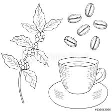 Coffee Plant Branch With Leaf Berry Bean Cup Food And Drink Organic
