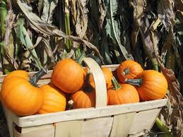 Pumpkin Patch Pittsburgh North Hills by 7 Must See Fall Festivals Around Pittsburgh Pittsburgh Beautiful