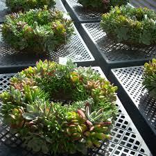 Disney Garden Decor Uk by Live Wreaths Centerpieces Plants Moss Form By Succulentsalon