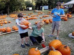 Pumpkin Patch Northwest Arkansas 2015 by Do A Good Deed This Halloween Buy A Pumpkin News