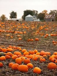 Pumpkin Farm Illinois Best by Oh How I Love Fall The Sights The Smells The Tastes The
