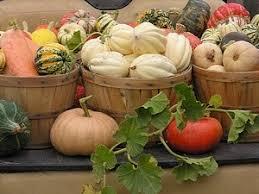 Greenbluff Pumpkin Patch Spokane Wa Hours by Knapp U0027s Localharvest
