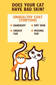 my cat has dandruff help support your cat s skin health s kitchen
