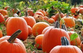 Pumpkin Picking Nj by Family Friendly Harvest Activities U0026 Halloween Events Visitnj Org