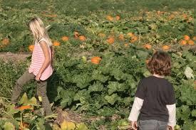 Oak Glen Pumpkin Patch Yucaipa by Live Oak Canyon Pumpkin Patch In Redlands Ca Parent Reviews