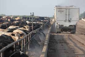Feedyards struggle amidst international economic hiccups