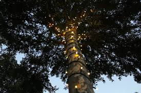 HOW TO WRAP OUTSIDE TREES WITH CHRISTMAS LIGHTS
