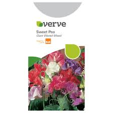 Verve Sweet Pea Seeds, Giant Waved Mix | Departments | DIY At B&Q Heathcote And Ivory Sweet Pea Honeysuckle Bathing Flowers Sweetpeas Torontos Best Florist Baby Rentals For Your Scottsdale Phoenix Az A Chair That Lasts From Infants To Adults Nuna Zaaz High Parties Decorating Kits Kid In Faux Fur Coat Skirt Sitting On Highchair Holding Amazoncom Gaags Water Resistant Table Cloth Seamless Pattern With Peas Gardening Article Mitre 10 Childcare Pod Natural Titanium Baby High Chair Mini Grey Sweetpea Willow Linkedin Babybjorn