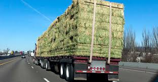 Mistakes Were Made: Selling Hay By The Bale And Not The Ton | Farm ... Hay Truck Stock Photos Images Alamy My 63 Chevy Hauling Hay Trucks Hay Hauler Loading Time Lapse Youtube Gmc Diesel Dairyland Co 24 Truck And Trailer In Flickr Australian Trucking On Twitter The Volvotrucks Ata Safety 5jp Ranch Life Page 6 Delivering To Market At Tenerir The Atlas Mountains Pinterest Overloaded In West Coast Of Turkey Image Farm With Family Help Men Riding Full