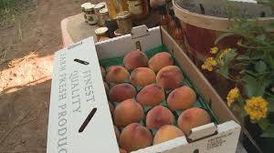 Schnepf Farms Halloween 2017 by Annual Peach Festival Kicks Off This Weekend At Schnepf Farms