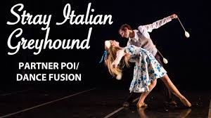 Why Is My Italian Greyhound Shedding by Stray Italian Greyhound Partner Poi Spinning And Dance Flowshow