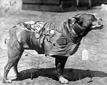 Most Decorated Soldier Ww1 by Sergeant Stubby Wikipedia