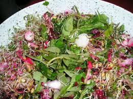 cuisine plantes sauvages les plantes sauvages dans la cuisine le des salariés