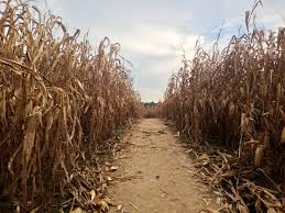Scariest Halloween Maze Los Angeles by The Country S Creepiest Haunted Corn Mazes For Halloween Travel