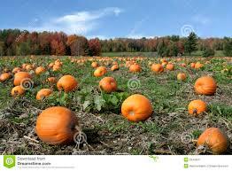 Bengtson Pumpkin Farm Lockport by Vanas Pumpkin Land Home Facebook