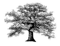 White Oak Tree Clipart