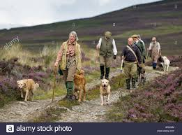100 Gamekeepers Dog Handlers And Game Keepers Walking Across A Heather Covered Stock