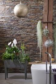 badezimmerpflanzen zimmerpflanzen des monats mai