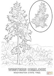 Washington State Tree Coloring Page With Pages
