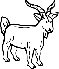Pin Billy Goat Clipart Line Drawing 5