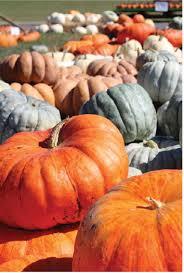 Portland Tn Pumpkin Patch by In Your Backyard Rainey U0027s Pumpkin Patch Yoursumner