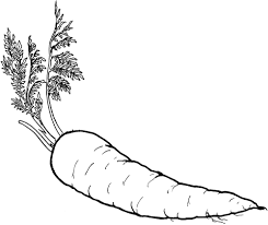 Coloring Pages Carrot Page Breadedcat Free Printable