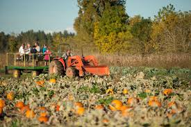 Pumpkin Farms Near Milwaukee by Bose Family Farm