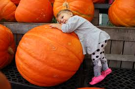 Morristown Nj Pumpkin Picking by Our Yearly Pick Stroller In The City