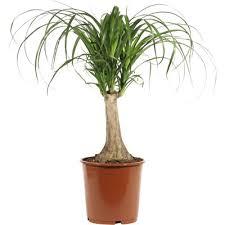 zimmerpflanzen landi