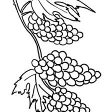 Grapes Coloring Pages Free