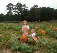 Pumpkin Patch Fayetteville Arkansas by Mom On The Go It U0027s Time For The Pumpkin Patch Blogs The