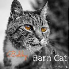 """Vale """"Bionic Bubby"""" The Barn Cat Ferals Strays And Barn Cats Cat Tales Tuesdays Fun And Aww My Moms Is Gorgeous Viralspell The Care Feeding Of Timber Creek Farm Program Buddies Seeking Support For Its Catsaving Efforts Adoption Barn Cats Near Bardstown Ky Petfinder For Green Rodent Control Turn To Barn Cats The Flying Farmers Free Images Wood Old Animal Cute Wall Pet Rural Sitting On Top Of Bales Straw Ready To Pounce Stock Weve Got Hire Central Missouri Humane Society By Jsf1 On Deviantart"""