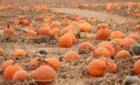Lehner Pumpkin Farm by Ohio Pumpkin Patches Local Fall Festivals