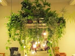 mit pflanzen und kräuter die küche und das esszimmer