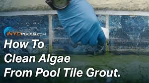 how to clean algae from pool tile grout