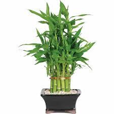 Fake Plants For The Bathroom by Live Plants U0026 Goods Walmart Com