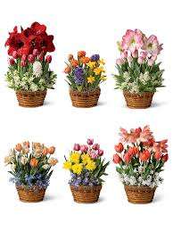 best 25 monthly flower delivery ideas on order