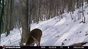 When Do Deer Shed Their Antlers Ontario by Ask Grant Hunting Advice And Tips For Serious Deer And Turkey