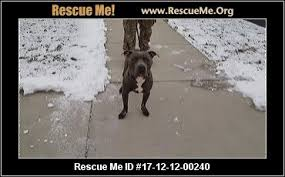 No Shed Dogs Illinois by Illinois Dog Rescue U2015 Adoptions U2015 Rescueme Org