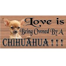 100 Where Is Chihuahua Located Wood Sign Handmade Wood Sign GS 442 Wood Sign Primitive Handmade Wood Sign