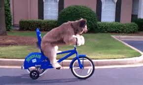 Dog Bikes GIF By Cheezburger