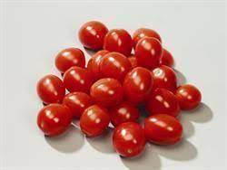 coeur de en pot tomate pixel ou tomate cœur de pigeon pixel pot 10cm jardiplante