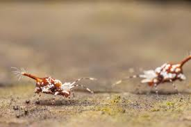 Kill Springtails In Bathroom by The Benefits Of Garden Springtails Alpha Ecological